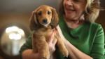 Дружба людей и собак регулируется окситоцином