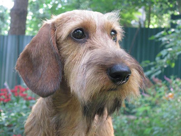 Как определить состояние здоровья собаки и лечить ее