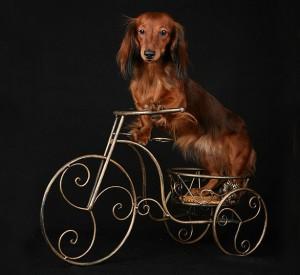 Что означают буквы в имени вашей собаки