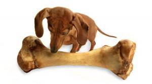 Нужны ли собакам кости