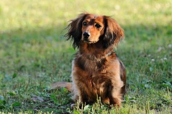 Как дать лекарство собаке