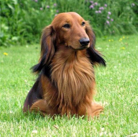 Черты характера собаки