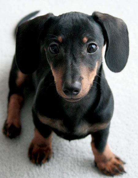 Регулярный уход за когтями собаки