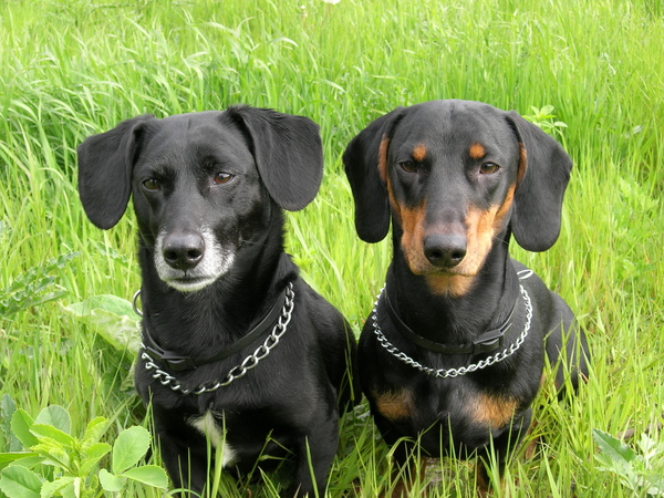 Периоды взросления собаки