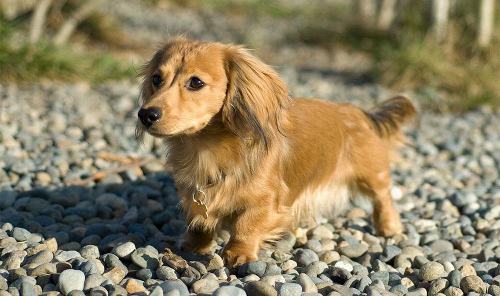 Чипирование домашних животных, собак
