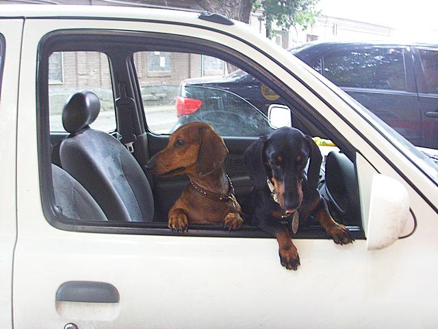Правила провоза собак в транспорте