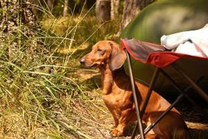 Притравка - подготовка к охоте