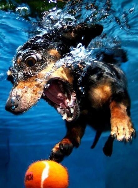 Как купать собаку, как вымыть таксу