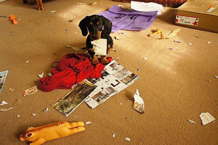 Почему собака плохо себя ведет и как отучить