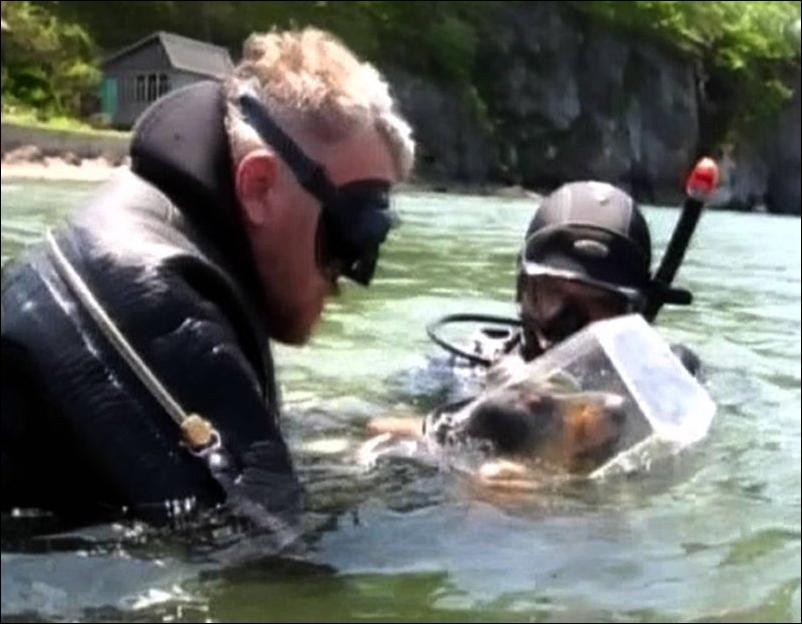 Такса - аквалангист или как научить таксу дайвингу