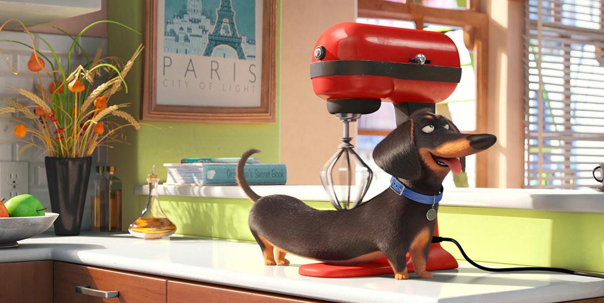 Такса Бадди — персонаж мультфильма Тайная жизнь домашних животных
