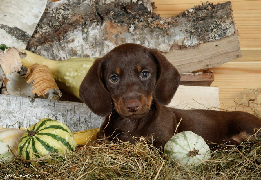 10 правил содержания домашних животных, закрепленных законом