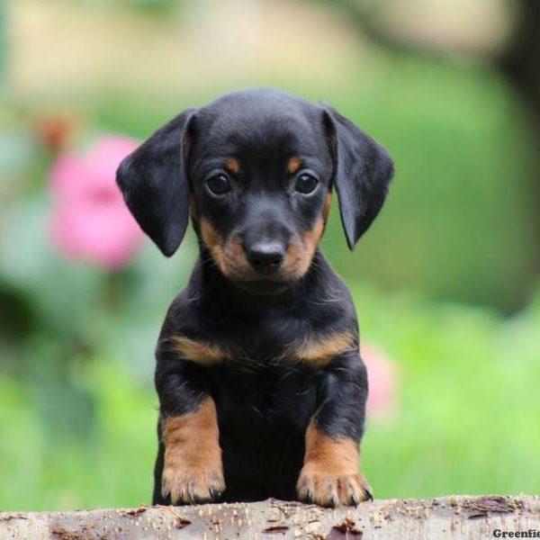 Перед покупкой собаки