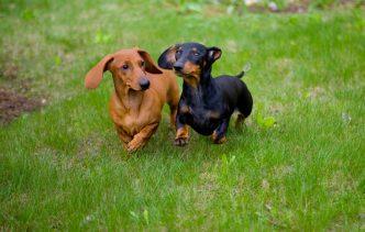 Особенности характеров собак (кабелей и сук)