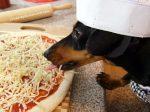 Кормление собак натуральным кормом