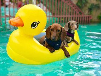 Бассейн открытый для посещения с животными